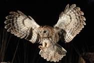 Owls Night