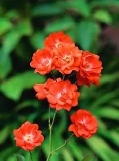 Flore de juin