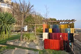 Jardin conservatoire des plantes tinctoriales