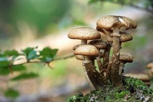 Les habitats des champignons