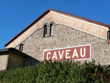 Les Vignerons de Saint-Gély - Vignoble