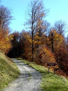 Route Forestière de Téchous