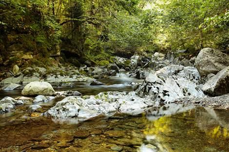 Ruisseau en Vallée du Lys