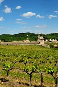 Balade vigne et vin à la Chartreuse de Valbonne