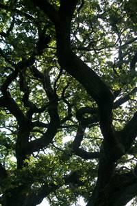 Vers le bois des Sauvages