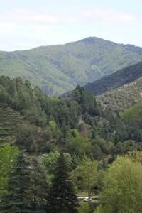 Une curieuse forêt en Vallée obscure