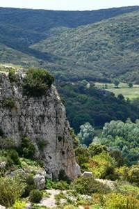 La Forêt Méditerranéenne dans tous ses états
