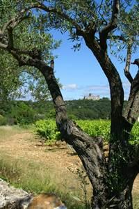 Re-Gard sur la forêt et Tornac