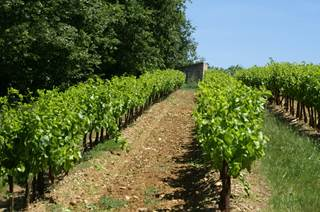 Cave des vignerons de Gaujac