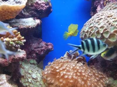 Lagoon Aquarium