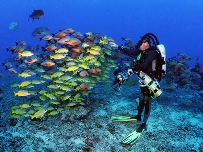 Tek Dive Experience
