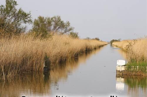 8a-Paysages étangs et roselières-mars2021 ©