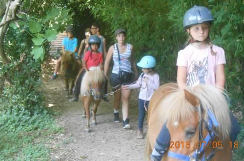 les poneys ©