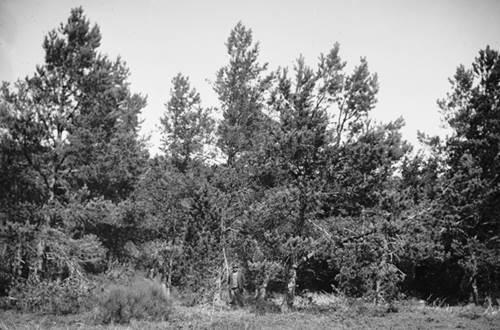Arboretum de Puechagut ©