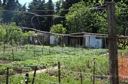 Les Jardins potagers solidaires ©
