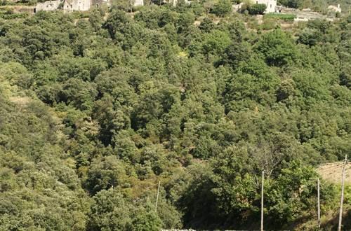 Terrasses de l'Aigoual ©