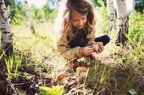 promenade-en-foret-pour-ramasser-des-champignons ©