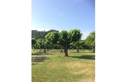 aire-naturelle-camping-clos-abbaye-cendras ©