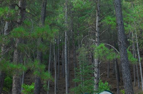 Camping la Forêt ©
