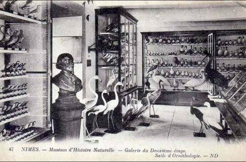 MUSEE D'HISTOIRE NATURELLE ©
