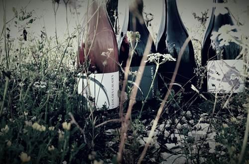 Vignes ©
