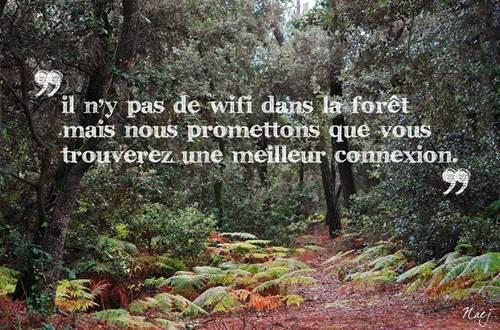 asinerie-badjane-connexion-dans-la-forêt ©