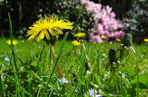 Insectes ©