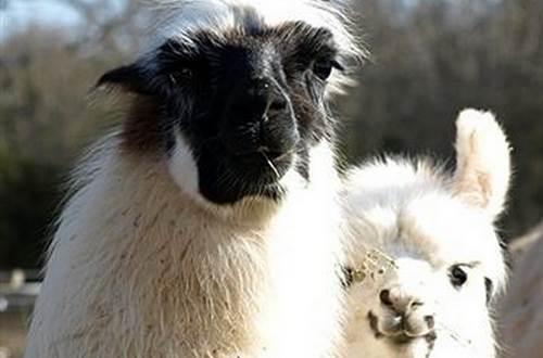 Causse et Lamas 12 ©