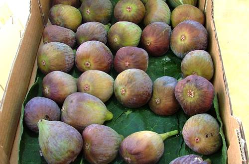 Figues ©