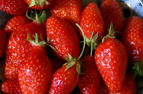 fraise de Nîmes ©