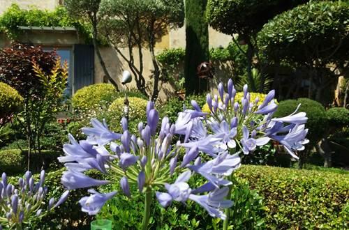 Le Jardin des Buis ©