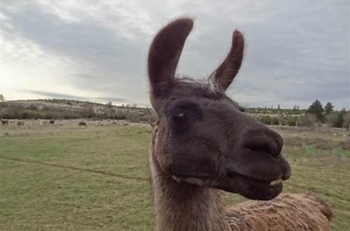 Causses et Lamas 2 ©