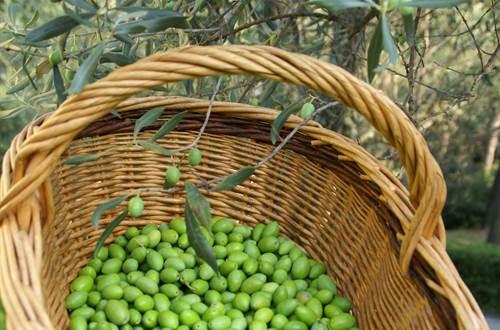 Olives ©