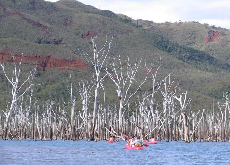 Forêt noyée