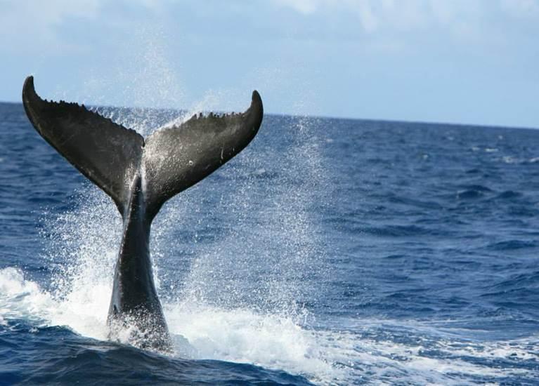 Sortie Baleines